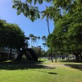 ハワイ大学が公認の樹木園に認定された話